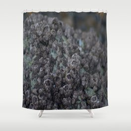 Barnacle Party Shower Curtain