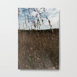 Cottonfield Number 1 Metal Print