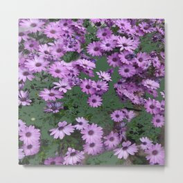 Lilac & Sage Color Purple Flowers Garden Metal Print