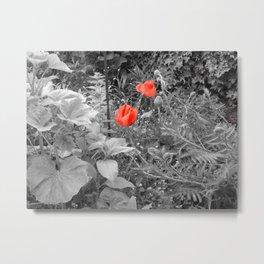 Giant Poppies Metal Print