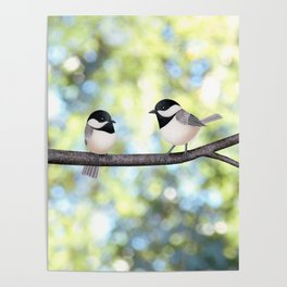 2 black-capped chickadees - bokeh Poster