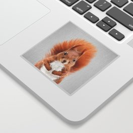 Squirrel 2 - Colorful Sticker