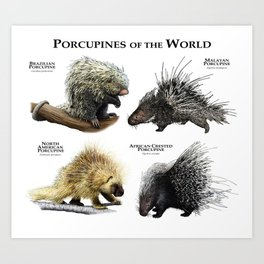 Porcupines of the World Art Print