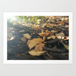 Mushrooms in Dappled Sunlight Art Print