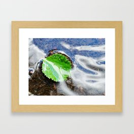 Mountain creek - birch leaf Framed Art Print