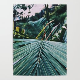 Palm leaves in a cold place Poster