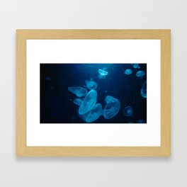 Jellys Framed Art Print