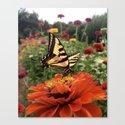 butterfly dreams by gypsydaydreamin