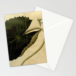 Flower castalia magnifica 2 Stationery Cards