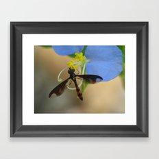fly on wildflower Framed Art Print