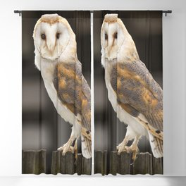 Barn Owl Blackout Curtain
