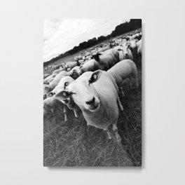 Sheep Metal Print