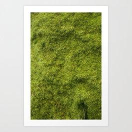 Moss Kunstdrucke