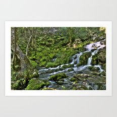 Natural Stream Art Print