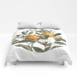 Orange Blossom Comforters