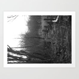 Path through the Marshes Art Print