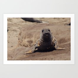 elephant seal pup Art Print