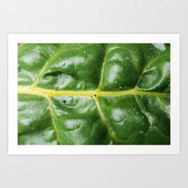 Swiss Chard Leaf Art Print