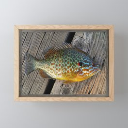 Fish On Wood Framed Mini Art Print