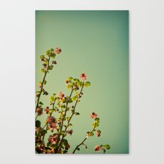 Vintage ribes plant Canvas Print