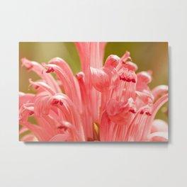 Pink spring 413 Metal Print
