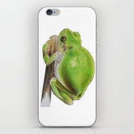 Plump Green Tree Frog iPhone Skin