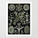 Naturalist Lichen by bluespecsstudio