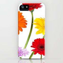 Colorful gerbera daisies iPhone Case
