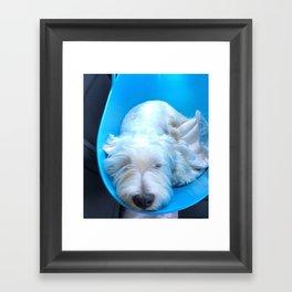 Dog2 Framed Art Print