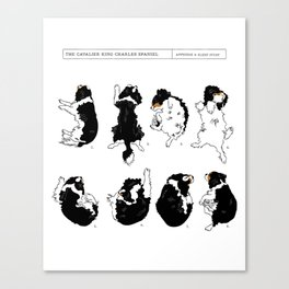 Cavalier King Charles Spaniel Sleep Study Art Print. Black & Tan. Illustrations Canvas Print