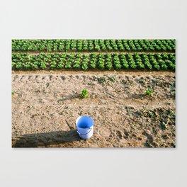 Farm  Canvas Print