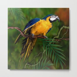 BLUE-GOLD MACAW PARROT IN JUNGLE Metal Print