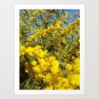 Mimosa 2 Art Print