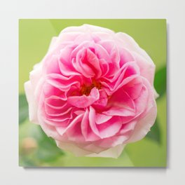 Pink Rose On A Natural Green Background #decor #society6 #buyart Metal Print
