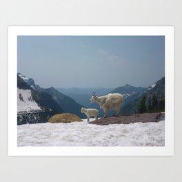 Mountain Goats of Montana Art Print