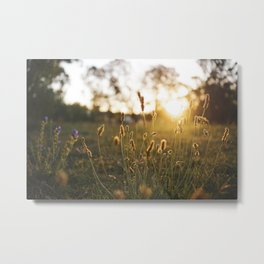 Sunset and flower in golden hour Metal Print