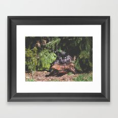 The king of the cats Framed Art Print