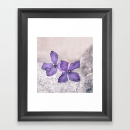 Zen Soft Pastel Purple Clematis Blossom Framed Art Print