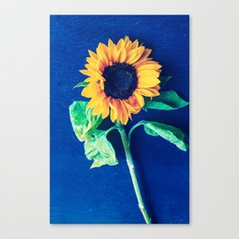 A decorative sunflower on the blue background Canvas Print