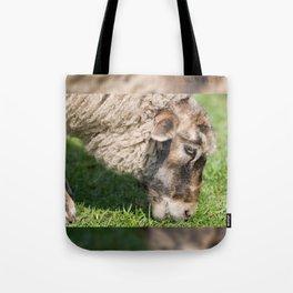 Single adult sheep eating grass Tote Bag