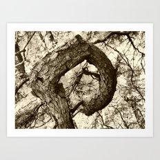 Corkscrew Tree Art Print