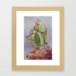 Butterfly 19 Framed Art Print