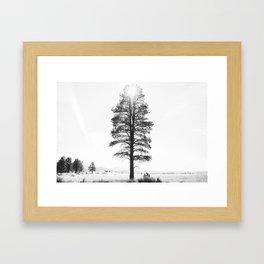 Black and White Pine Framed Art Print