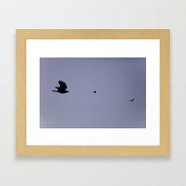 Birds in flight Framed Art Print