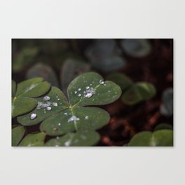 Luck has nothing to do with it. Canvas Print