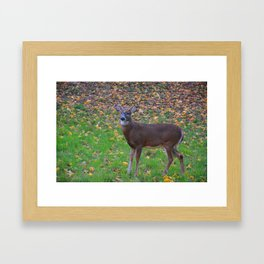 Curiosity of Youth Framed Art Print