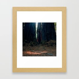 Big Basin Framed Art Print