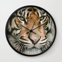 Tiger looking Wall Clock