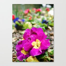 Soon to be Spring Canvas Print