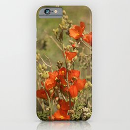 Desert Wildflower - 4 iPhone Case